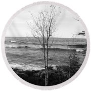 Solo Young Tree Round Beach Towel
