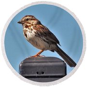 Song Sparrow Profile         Summer      Indiana Round Beach Towel