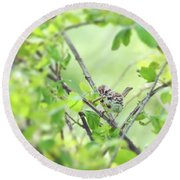Song Sparrow With Dinner Round Beach Towel