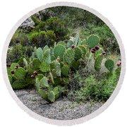 Sonoran Cactus Round Beach Towel