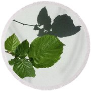 Sophisticated Shadows - Glossy Hazelnut Leaves On White Stucco - Horizontal View Left Down Round Beach Towel