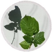 Sophisticated Shadows - Glossy Hazelnut Leaves On White Stucco - Vertical View Upwards Left Round Beach Towel