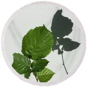 Sophisticated Shadows - Glossy Hazelnut Leaves On White Stucco - Vertical View Upwards Right Round Beach Towel