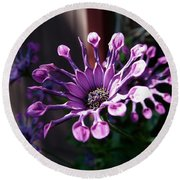 South African Daisy Round Beach Towel