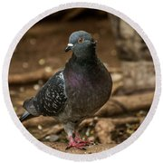 South American Pigeon  Round Beach Towel