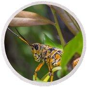 Southeastern Lubber Grasshopper Round Beach Towel