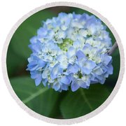 Southern Blue Hydrangea Blooming Round Beach Towel