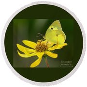 Southern Dogface Butterfly Round Beach Towel
