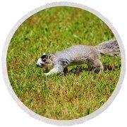 Southern Fox Squirrel Round Beach Towel