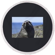 Southern Fur Seal Round Beach Towel