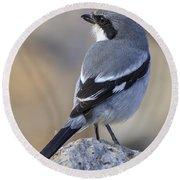 Southern Grey Shrike-- . Round Beach Towel