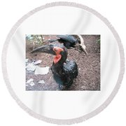 Southern Ground Hornbill Round Beach Towel