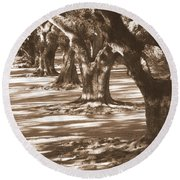 Southern Sunlight On Live Oaks Round Beach Towel