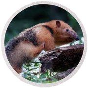 Southern Tamandua Or Collared Anteater Round Beach Towel
