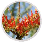 Southwest Ocotillo Bloom Round Beach Towel