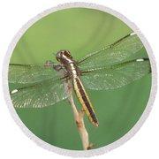 Spangled Skimmer Dragonfly Female Round Beach Towel