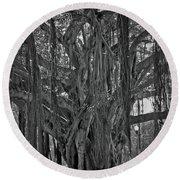 Spanish Moss Of The Tree Round Beach Towel
