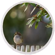 Sparrow In Colonial Williamsburg Round Beach Towel