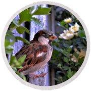 Sparrow In The Shrubs Round Beach Towel