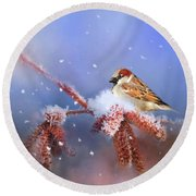 Sparrow In Winter Round Beach Towel