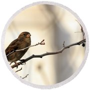 Sparrow On A Limb Round Beach Towel