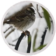Sparrow On Fence Round Beach Towel
