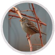 Sparrow On Grape Vine Round Beach Towel