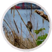 Sparrow On The Cattails Round Beach Towel