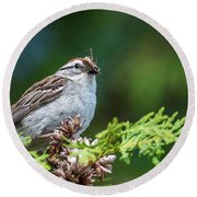 Sparrow With Lunch Round Beach Towel