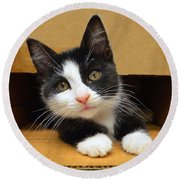 Special Delivery Tuxedo Kitten Round Beach Towel