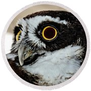Spectacle Owl Round Beach Towel