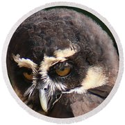 Spectacled Owl Portrait 2 Round Beach Towel