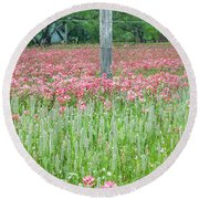 Spellbound By Indian Paint Brush. Round Beach Towel