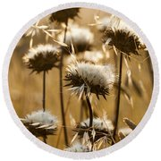 Spent Flowers In The Field Round Beach Towel