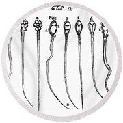 Spermatozoa, Leeuwenhoek, 1657 Round Beach Towel