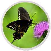 Spicebush Swallowtail Butterfly Round Beach Towel