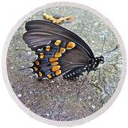 Spicebush Swallowtail Butterfly Female - Papilio Troilus Troilus Round Beach Towel