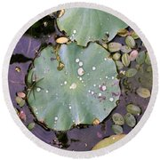 Spider And Lillypad Round Beach Towel