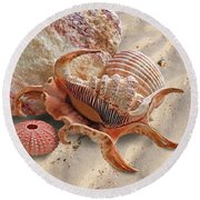 Spider Conch Shell On The Beach Round Beach Towel