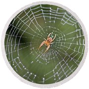 Spider In A Dew Covered Web Round Beach Towel