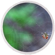Spider In Web Round Beach Towel