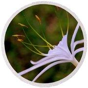 Spider Lilly Flower 2 Round Beach Towel