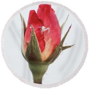 Spider On A Rose Round Beach Towel