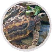 Spider Tortoise       Zoo    Indiana Round Beach Towel