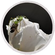 Spider Vs Bee On Rose Round Beach Towel
