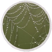 Spider Web With Water Droplets  Round Beach Towel