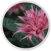 Spiky Pink Round Beach Towel