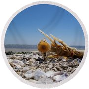 Spineless Round Beach Towel