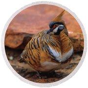 Spinifex Pigeon Round Beach Towel