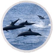 Spinner Dolphins Round Beach Towel
